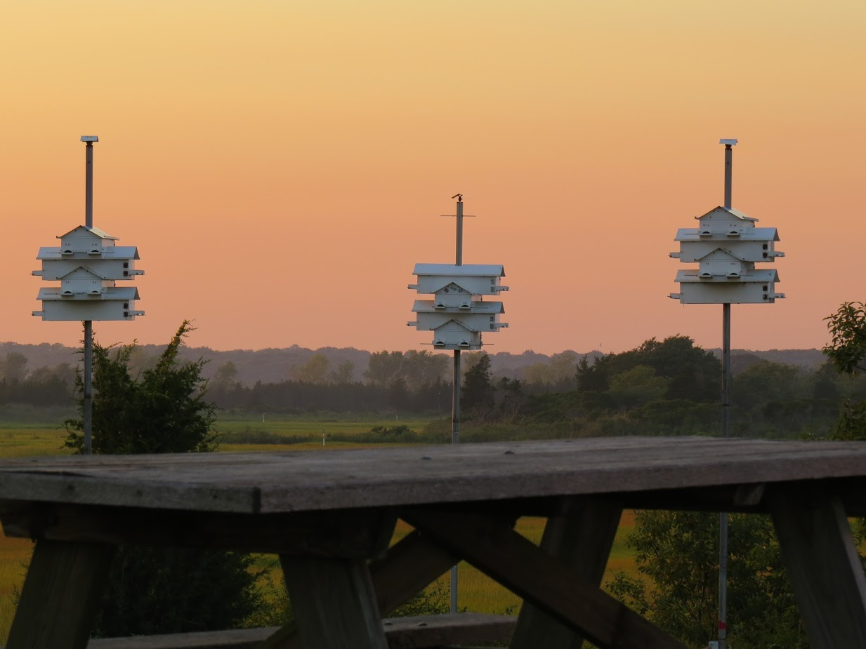 Purple Martin Houses at Meigs Point Nature Center