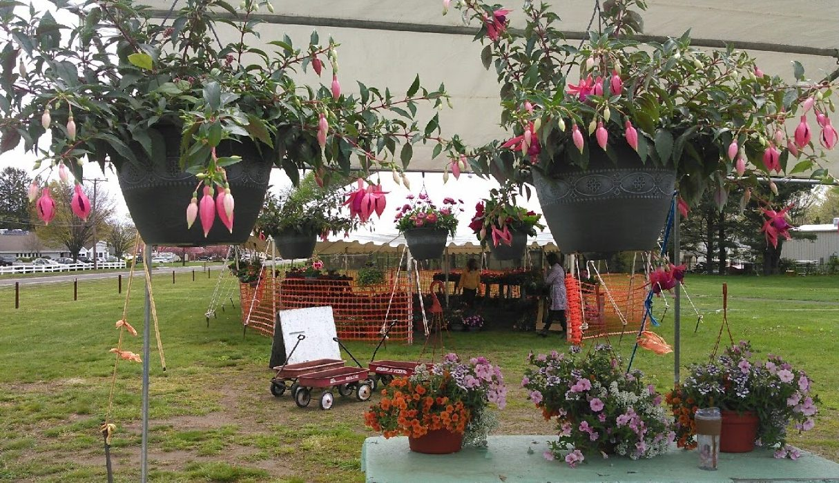 Friends of Hammonasset Plant Sale