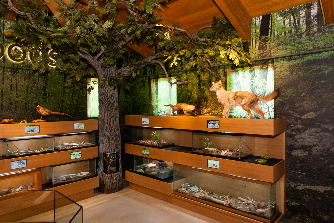 Meigs Point Nature Center - In The Woods Room