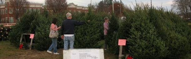 Friends of Hammonasset Tree Sale