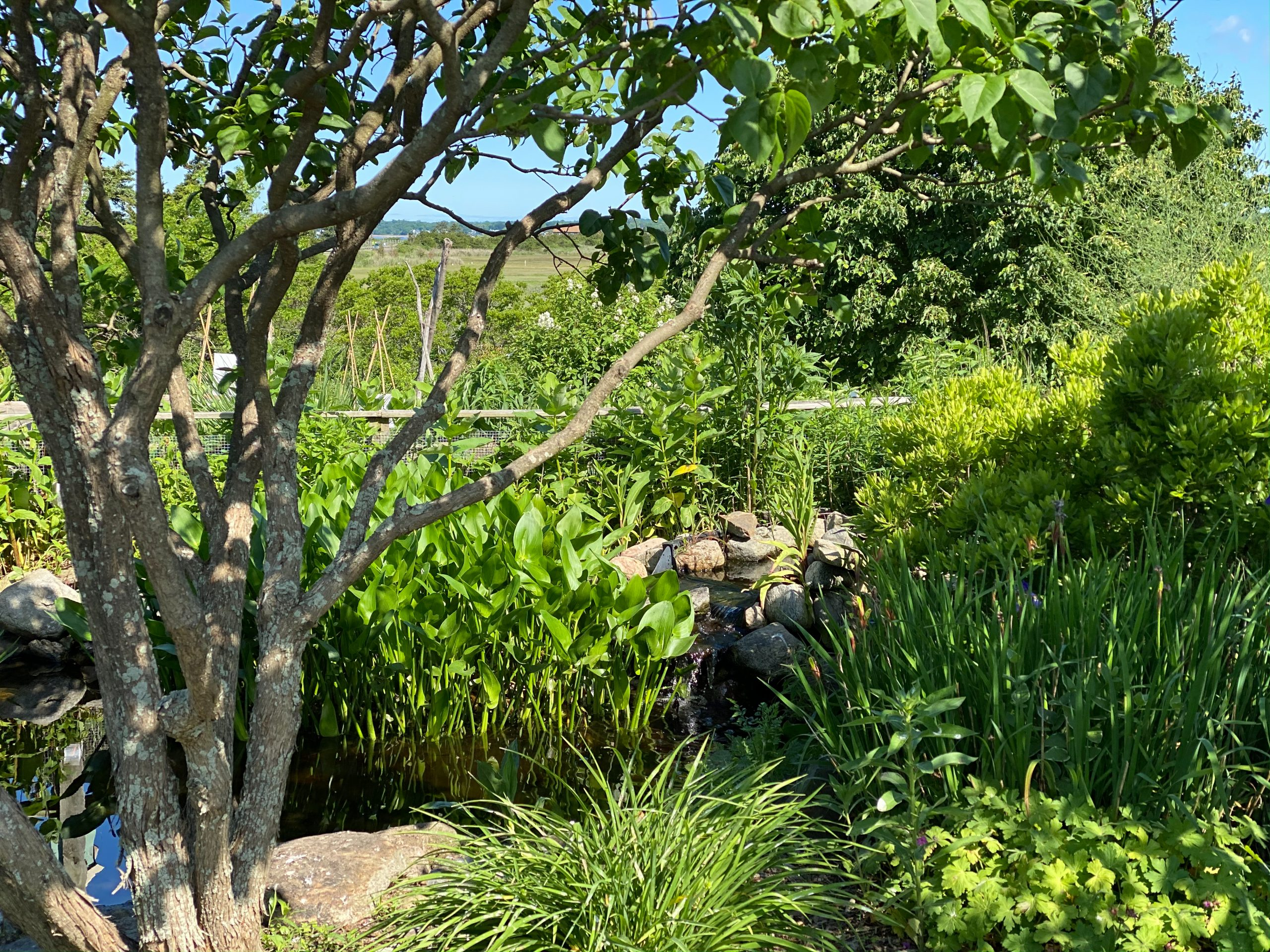 The Gardens at Meigs Point Nature Center